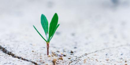 Sprout image by Stanislav Kondratiev on Unsplash