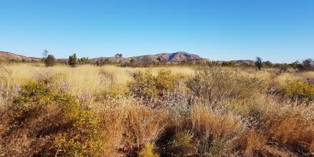 View of the outback