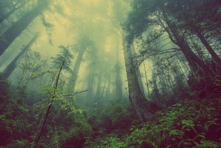 Forest Image by Free-Photos from Pixabay under Pixabay Licence