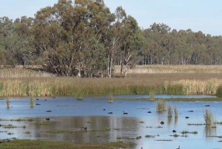 Image: Wetlands, Murray-Darling basin, Australia by Water Alternatives Flickr under CC BY-NC 2.0