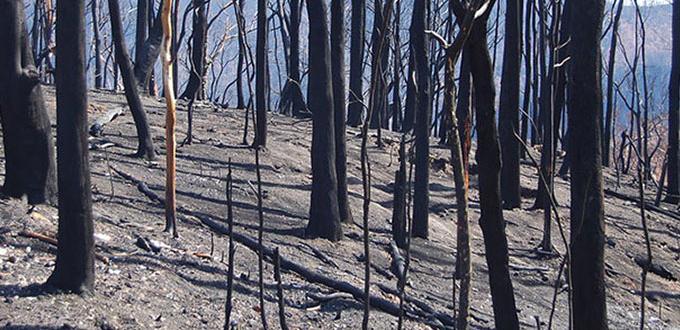 Image: Bushfireby Elizabeth Donoghue (Flikr)